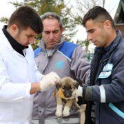Aksaray Belediyesi ölüme terkedilen yavru köpeklere şefkat eli uzattı