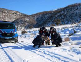Jandarma sahipsiz hayvanlar için doğaya yem bıraktı