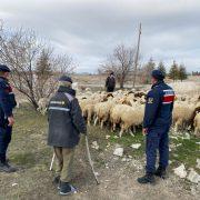 Jandarma kaybolan koyunları Dron ile buldu