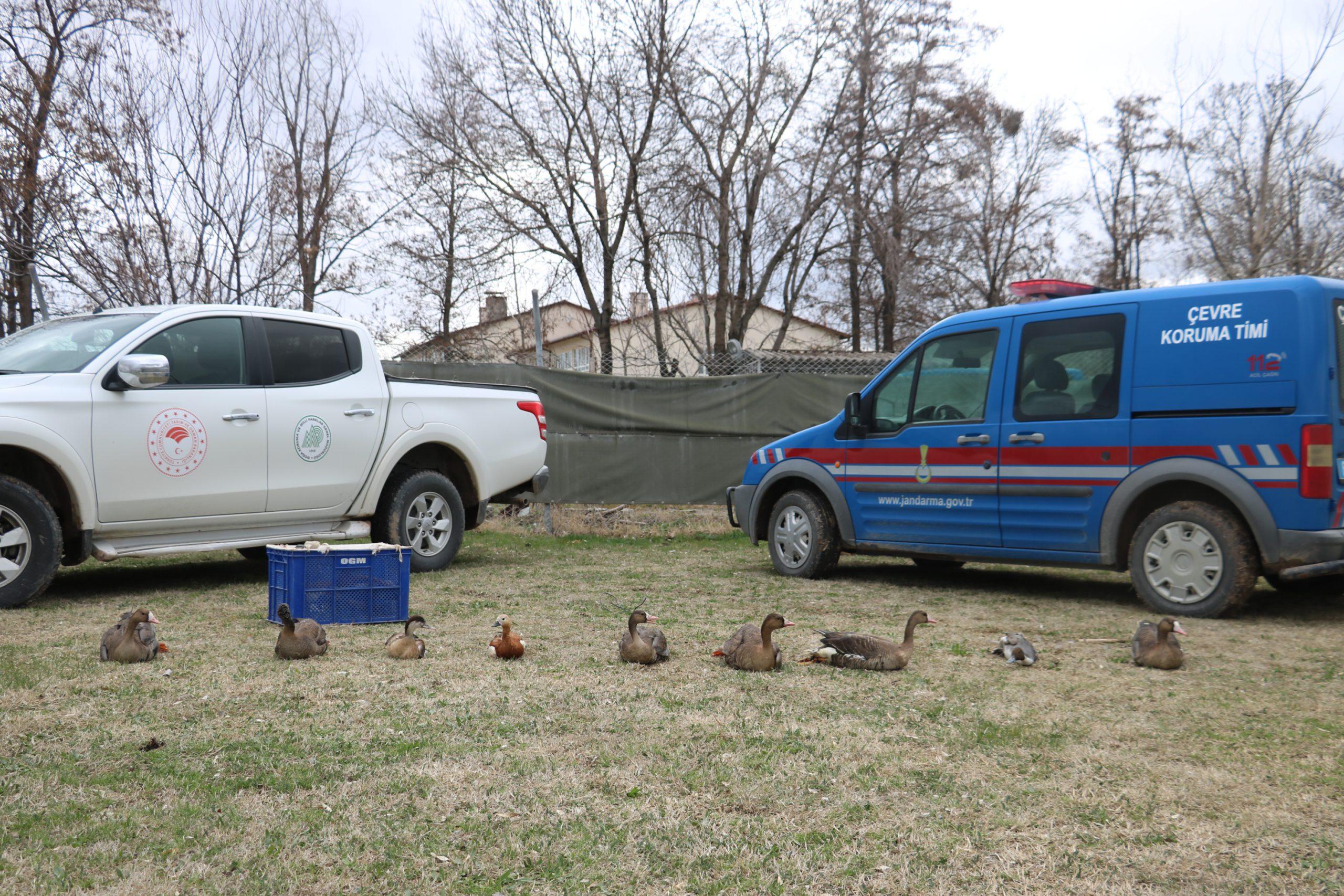 13 değerli kuş Jandarma operasyonuyla koruma altına alındı