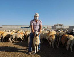 Koyunları Telef Olan çiftçiye Devlet sahip çıktı